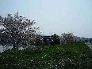 加茂川土手付近